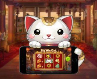 Nordicbet Casino lancerer Big Win Cat med cashback bonusser