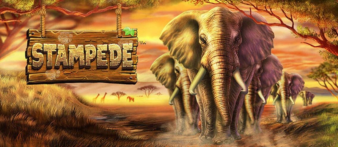Spillehallen Stampede logo banner